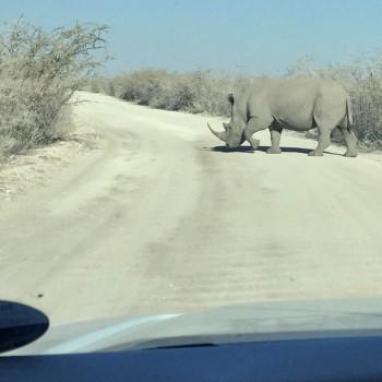 Animals Crossing!