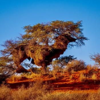Kalahari Kunst