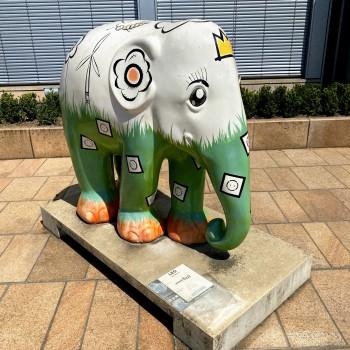 The Asian Elephant Foundation