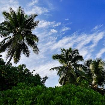 Am Palmenstrand ?