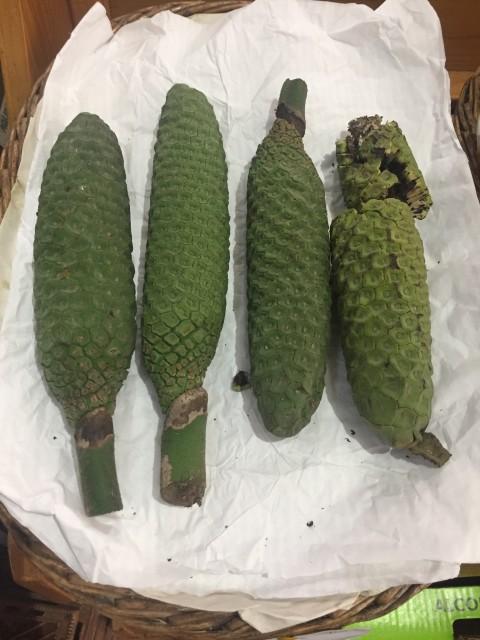 Die Banananas