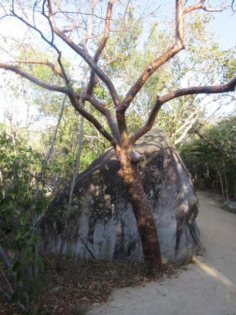 Plastikbaum?