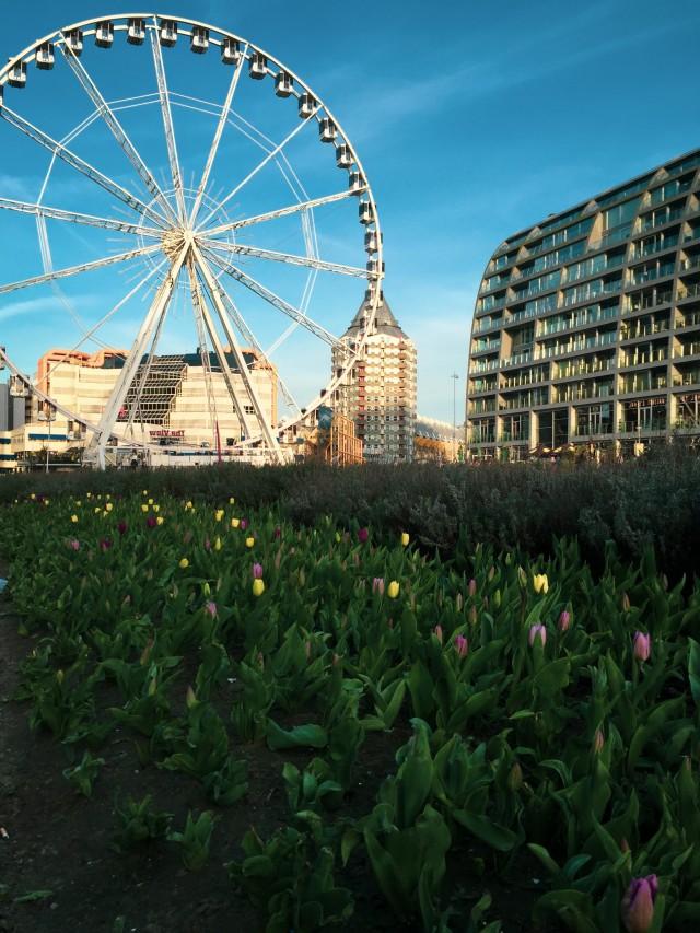 Tulpen und Riesenrad