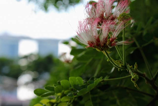 Blütenpracht & Marina Bay Sands