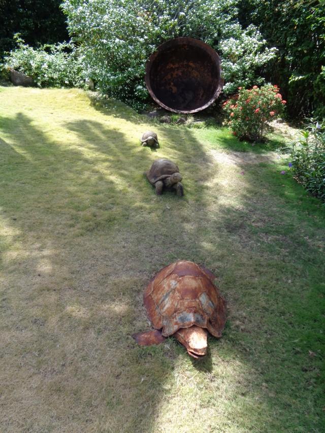 Schildkröten auf Wanderung