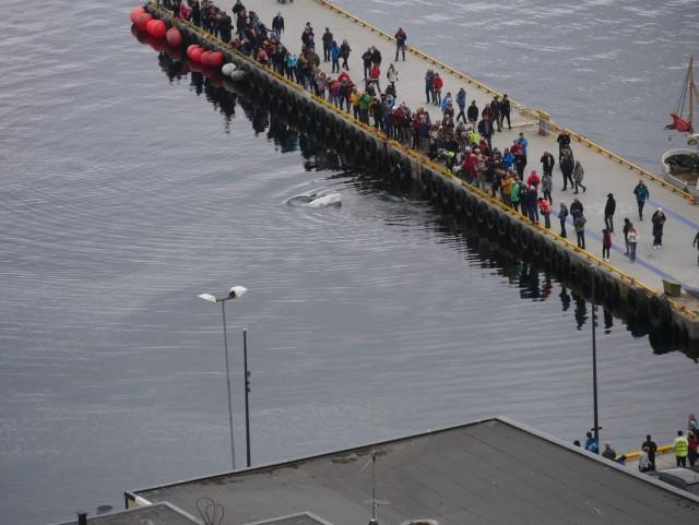 Der König des Hafens von Hammerfest!!