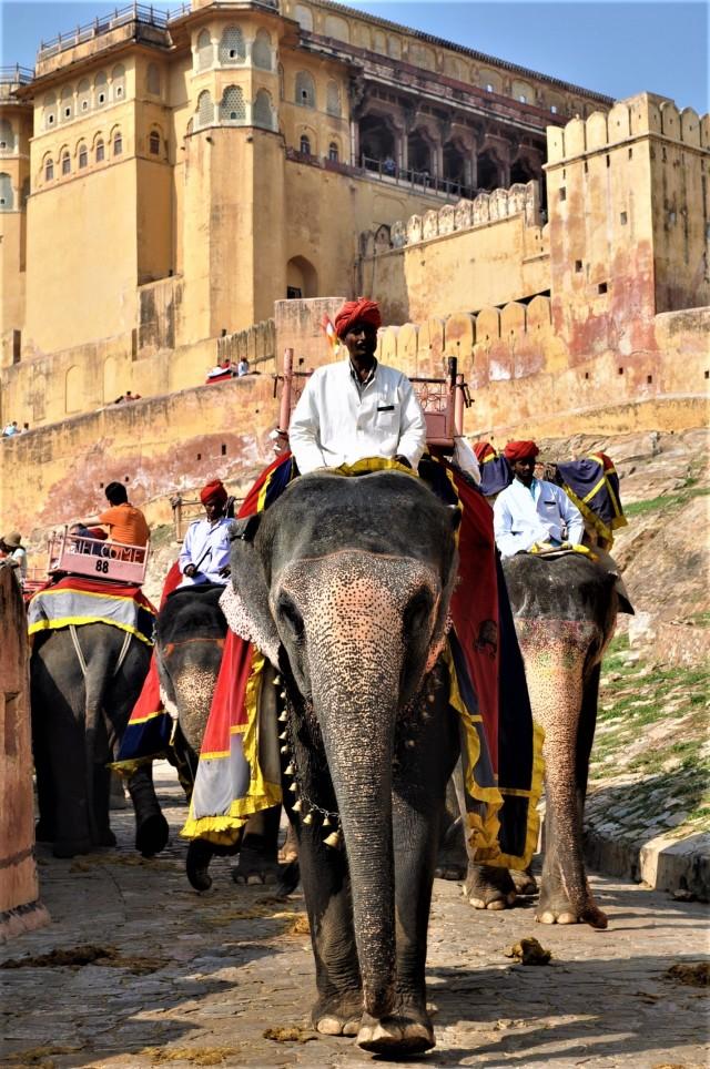 Elefant im Fort von Amber