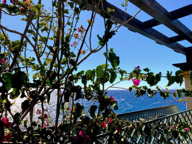 Madeiras Blütenpracht
