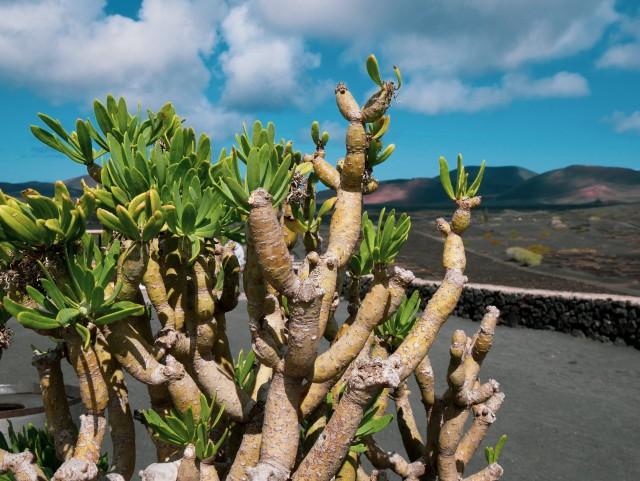 (M)ein kleiner grüner Kaktus