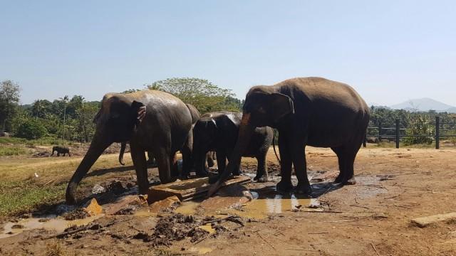 Elefanten Waisenhaus
