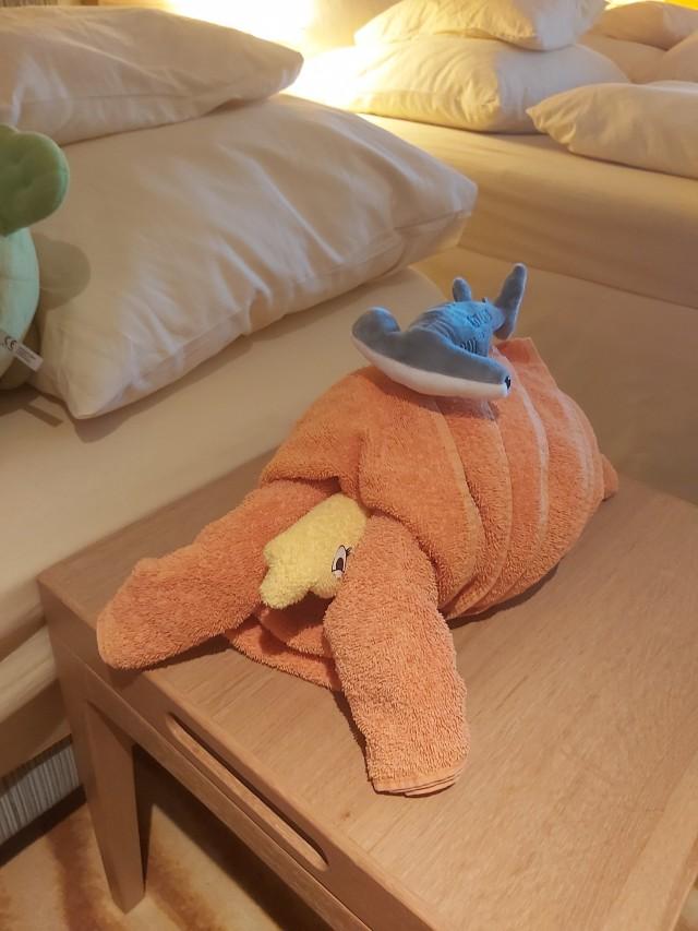 Handtuchschildkröte
