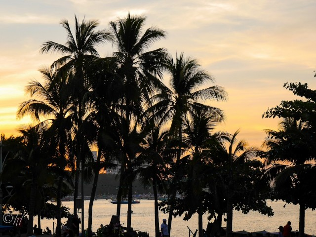 Palmen in der Abendsonne