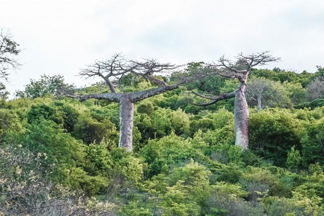 Typisch Madagaskar