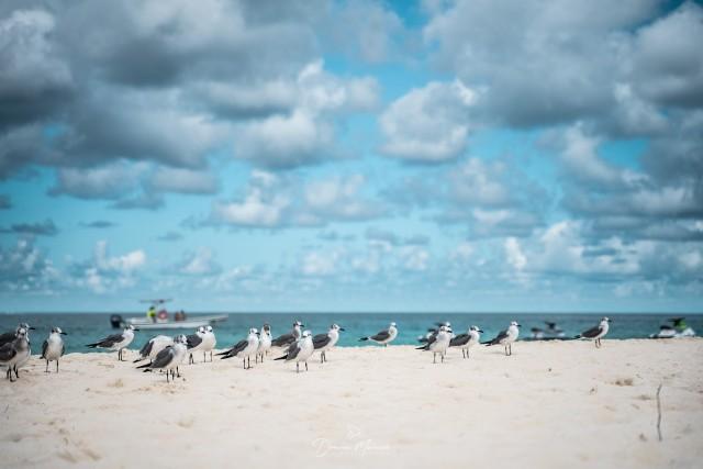 Aruba: Der erste karibische Strand