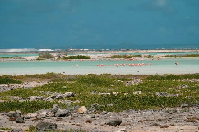 Flamingos in freier Natur