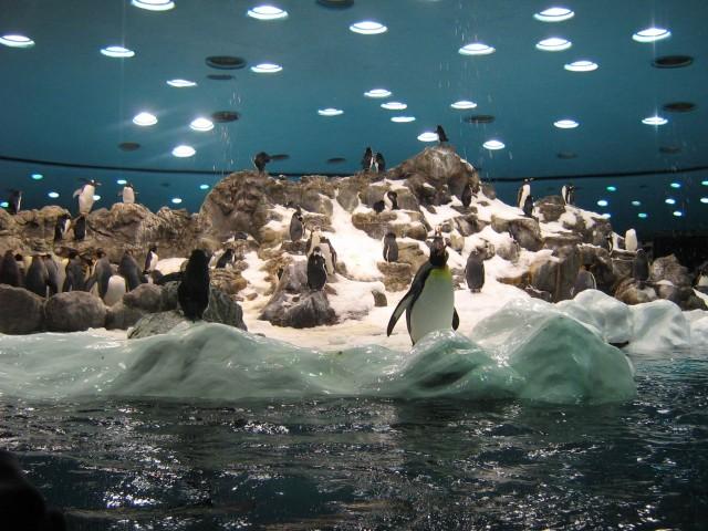 Pinguinalarm