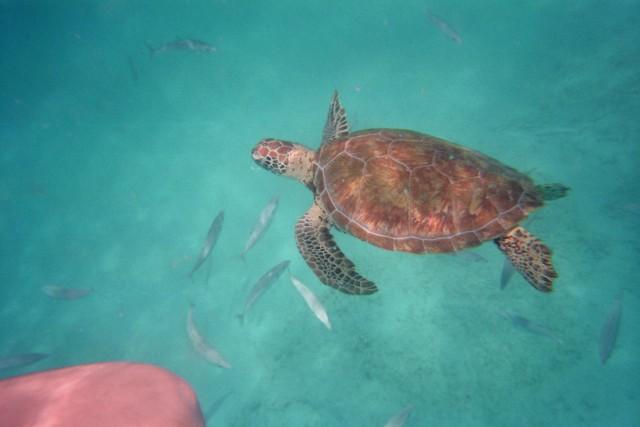 Schildkröten - Alarm