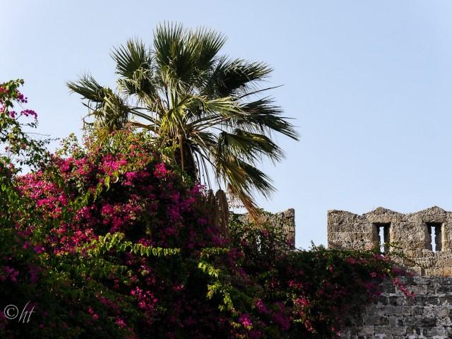 Blumengeschmückte Stadtmauer von Rhodos Stadt