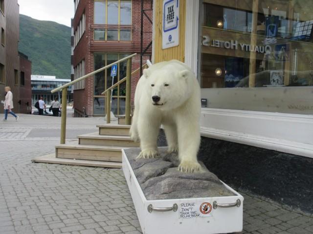 Ein Eisbär in der Stadt