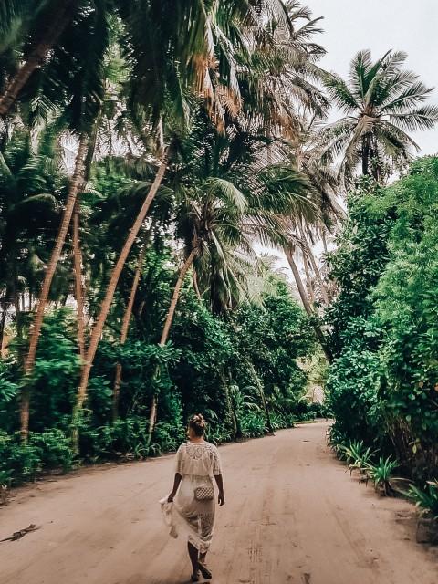 Palmenwald auf den Malediven