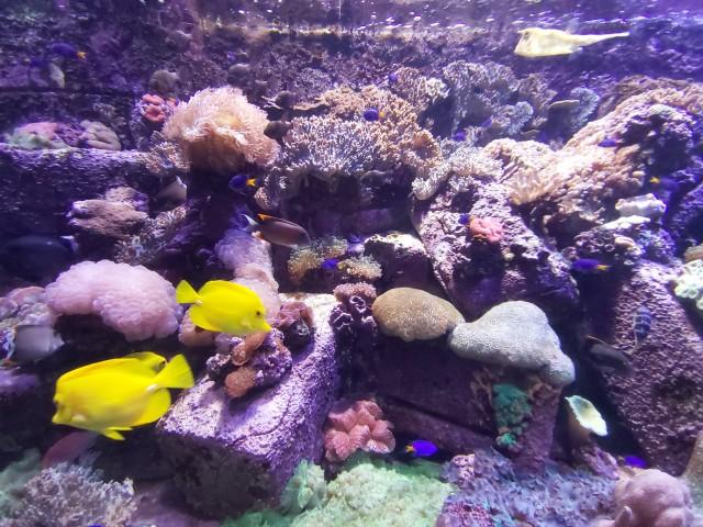 Besuch im Lost Chambers Aquarium