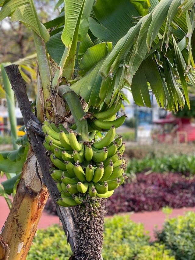 Bananen am Straßenrand