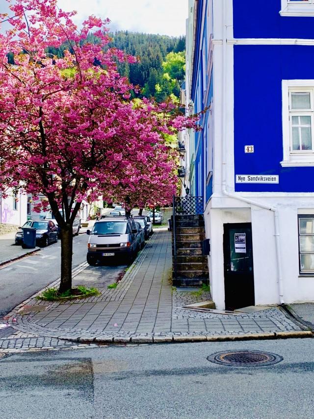 Farbenvielfalt in Bergen
