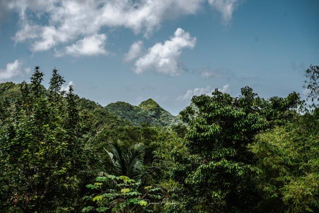 Regenwald auf Grenada