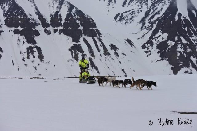 Hundeschlittentour auf Spitzbergen