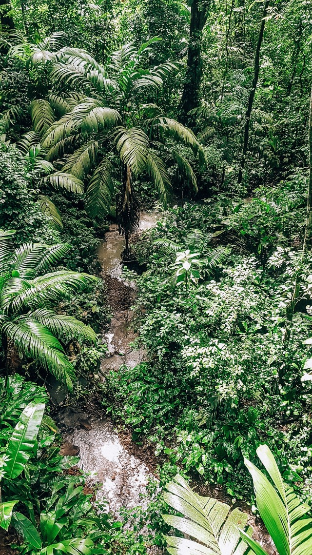 Regenwald-Vibes