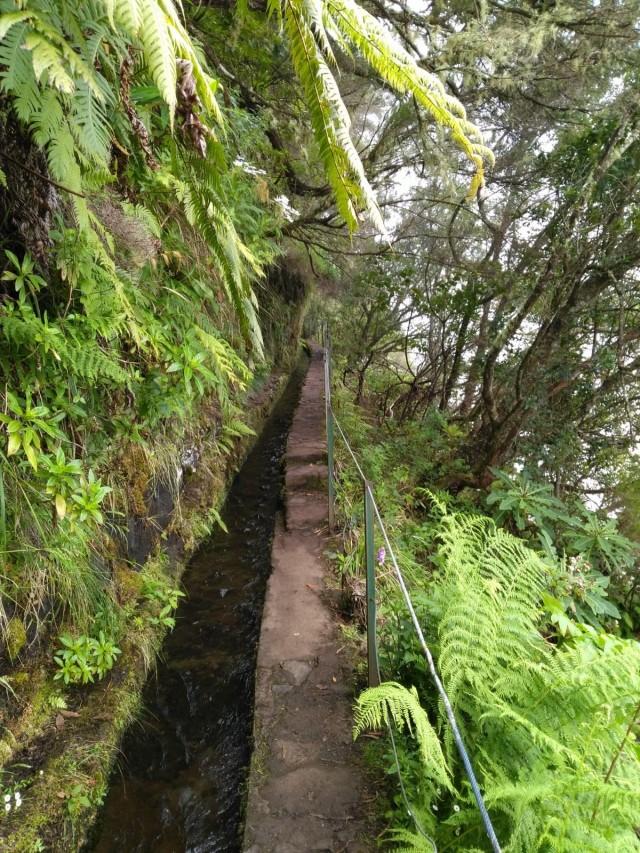 Levada Wanderung im Grünen Kessel