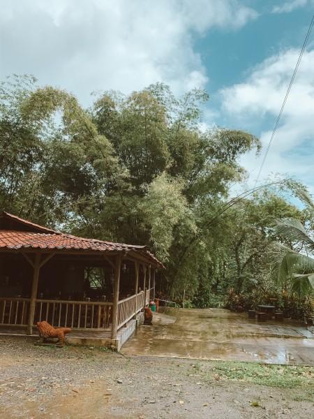 Canopy / Zipline