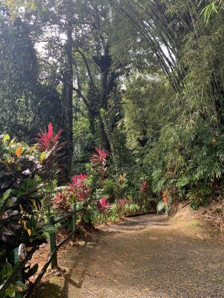 Costa Rica - Flora & Fauna
