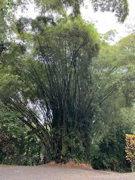 Mitten im tiefsten Regenwald