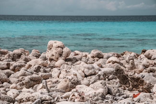 Korallen und Meer